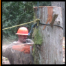 tree removal in portland oregon