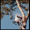 Tree trimming pruning and Tree Care Services Portland Oregon